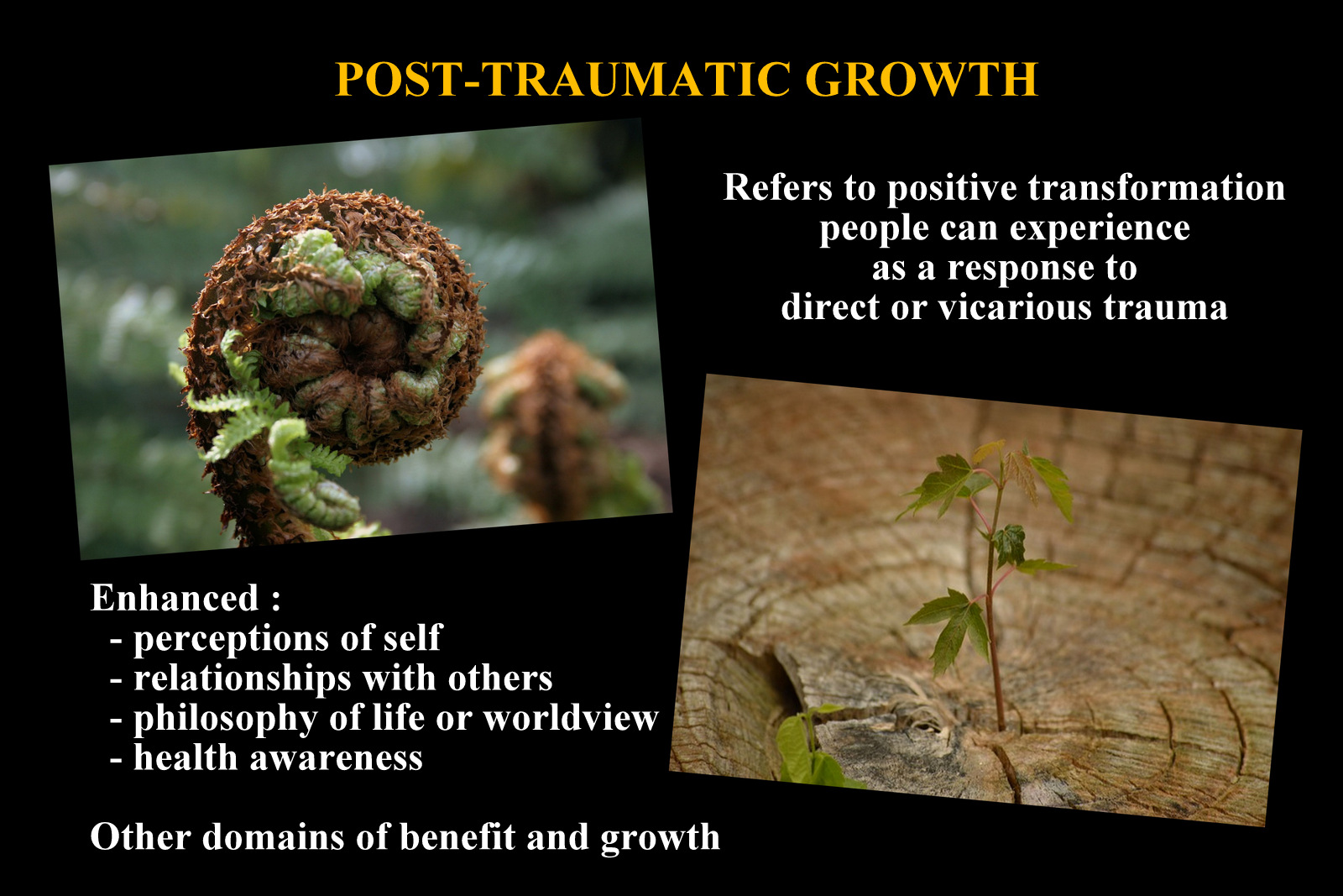 Real Experiences Of Post-Traumatic Growth
