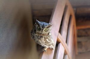 owls-286233_640[1]